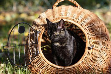 katzenhaltung in der wohnung katzenhaltung in der wohnung tierschutz tierhaltung 2018