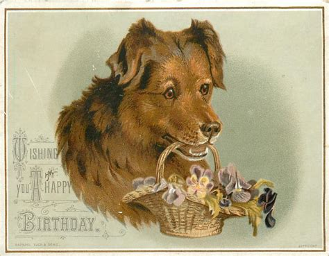 dog holds basket  flowers   mouth tuckdb ephemera