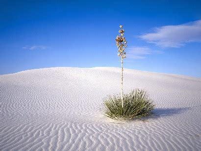 fiore nel deserto viaggiare in israele e non
