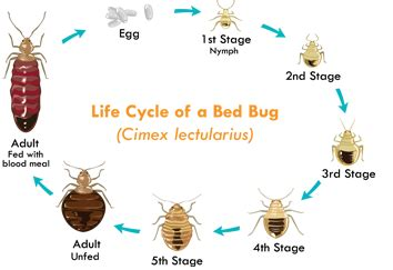 how much is a bed bug exterminator how much is a bed bug exterminator bedding sets