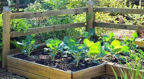 fall vegetable garden how to prepare for your fall vegetable garden