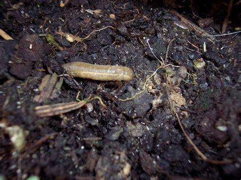 larven im garten was f 252 r larven im teich mein sch 246 ner garten forum