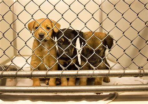humane society puppies portsmouth humane society seeks to make transition to a no kill shelter htonroads