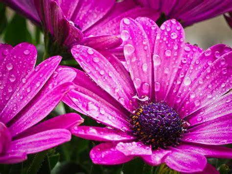foto fiore immagini acqua natura fiorire fiore petalo