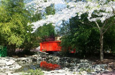 japanese garden at wing park virginia photo