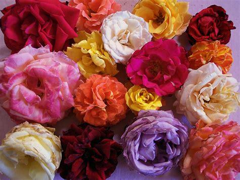 fiori per desktop sfondo desktop fiori