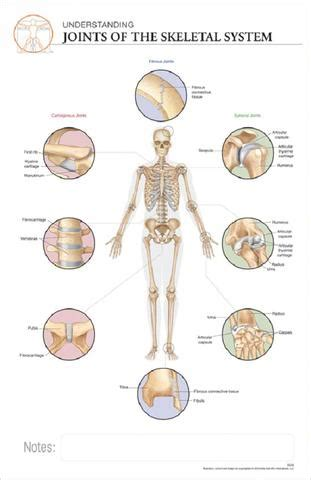 11x17 post it anatomy poster the different types of