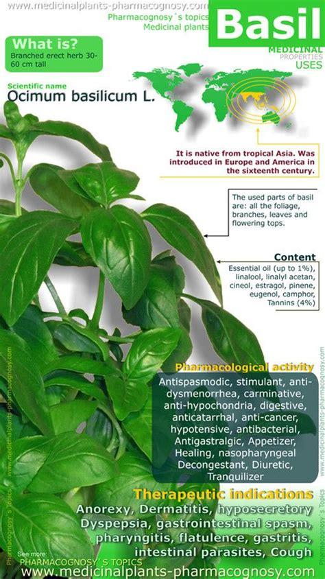benefits of houseplants 25 best ideas about basil health benefits on pinterest