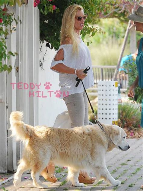 adam levine golden retriever 20 who own golden retrievers right now the daily golden