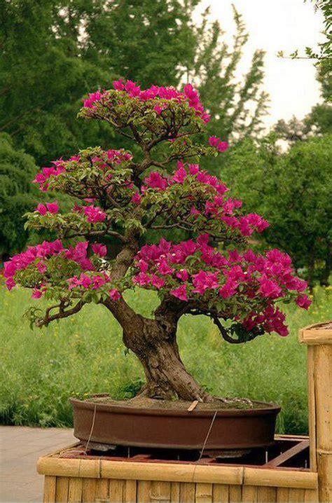 Kleiner Baum Für Garten 858 by Beautiful Blooming Bonsai Bonsai Bonsai