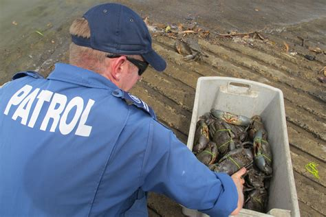 bay boats redcliffe contact number caboolture crab crackdown boat seized hefty fine moreton