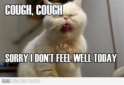 Sick Cat Meme - site index mysickcat com