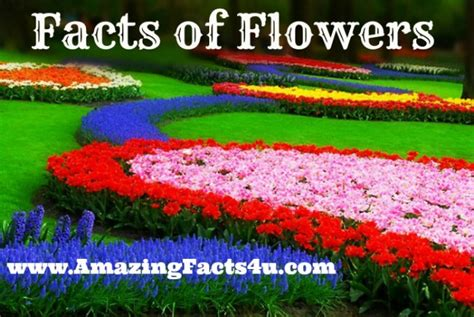 facts about flowers flowers amazing facts 4 u