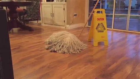 dogs that look like mops mop