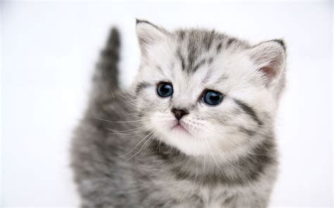 Wallpaper Cute Kitty | 1920x1200 small cute kitty desktop pc and mac wallpaper