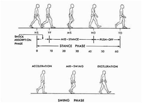 swing gait figure 1 the gait cycle showing events in sta o p