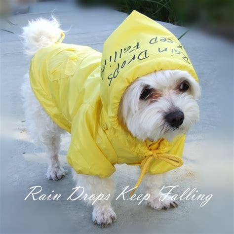 puppy raincoat raincoats for safety supplies