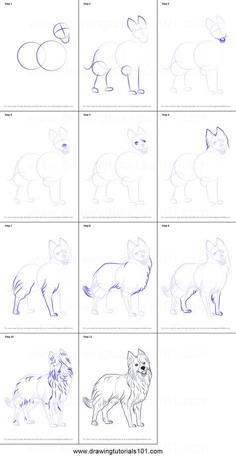 how to a border collie puppy how to draw border collie printable step by step drawing sheet drawingtutorials101