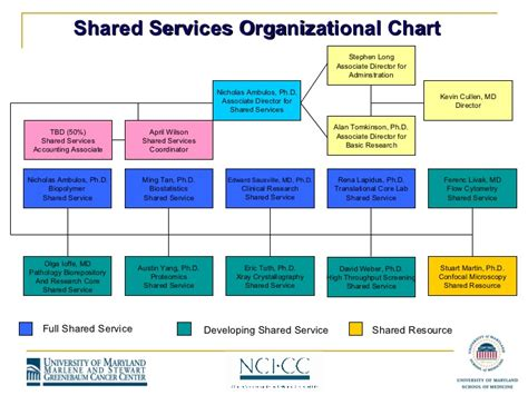 for shared service organizational chart examples pictures