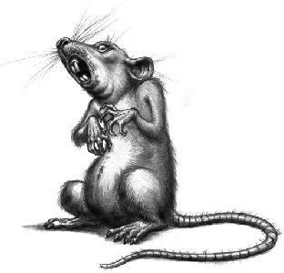 membuat jebakan tikus rumahan kisah keluarga tikus 171 sebuah kata hati