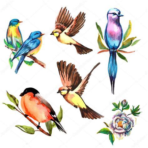 Birds Illustration set watercolor bird vector illustration stock vector
