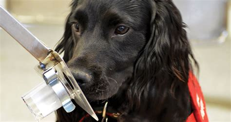 dogs detect cancer breast cancer detection dogs