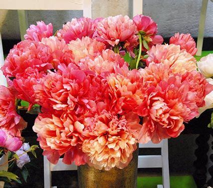 unbloomed peonies 62 best images about garden peonies on pinterest see