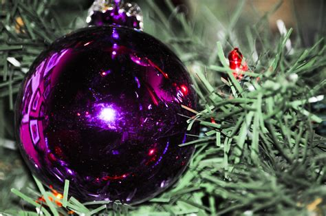 purple ornaments purple tree ornament free stock photo
