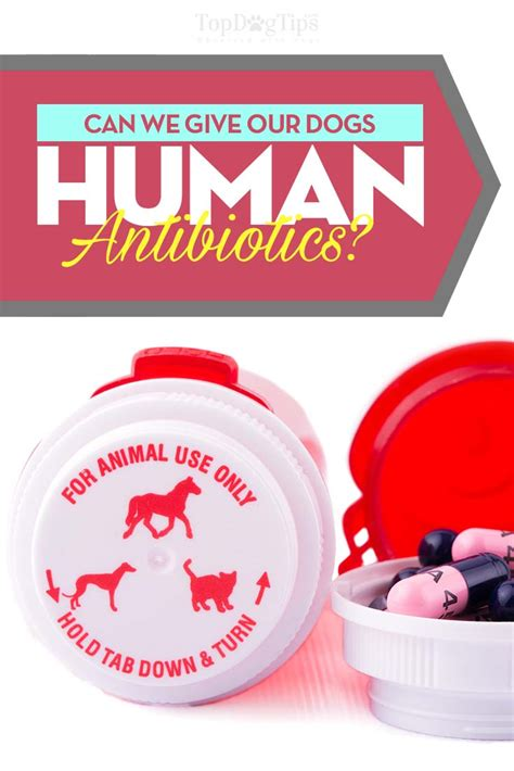 can you give a amoxicillin antibiotics for dogs can you give dogs human antibiotics
