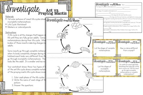 cycle of plants and animals worksheets cycles of plants and animals science stations for third grade