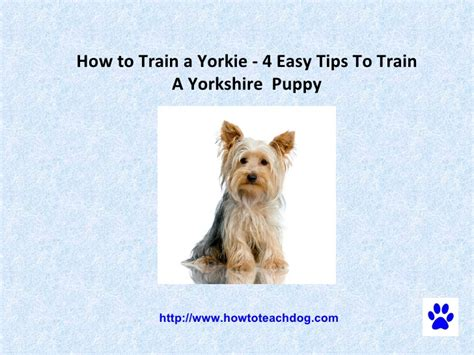 are yorkies easy to potty how to housebreak a yorkie 28 images yorkie potty techniques breeds picture