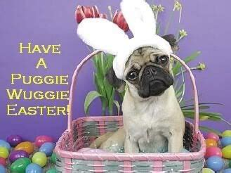 happy easter pug 15 best images about easter pets on