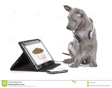 hungry puppies hungry puppy looking at food royalty free stock photo image 36130105