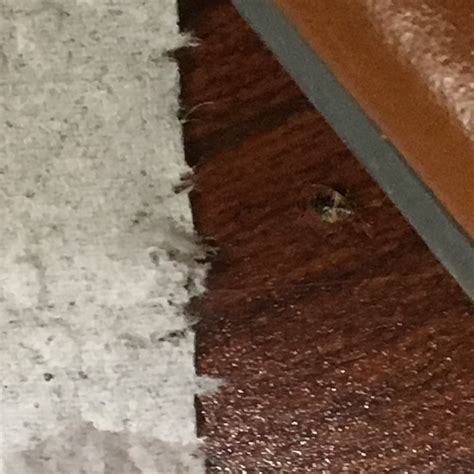 bed bugs in apartment who pays new hshire bed bug hotel and apartment reports