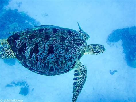 best place to dive the great barrier reef how to scuba dive the great barrier reef and avoid the crowds