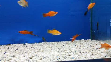 arredo acquario acqua dolce pirana aquarium nuovi arrivi