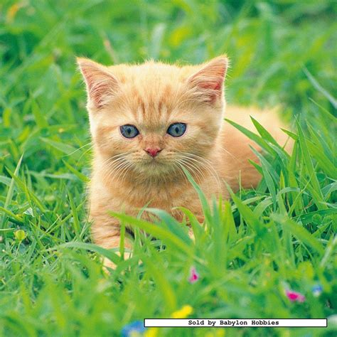 49 st puzzel: Lieve katjes (3x) (Katten) (Ravensburger