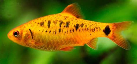 los peces de la el sistema nervioso de los peces 174 anipedia net