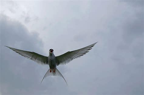 images jpeg choosing raw or jpeg craig jones wildlife photographer