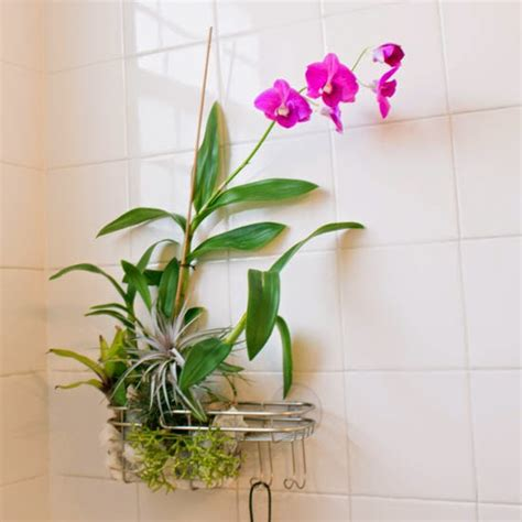 The Rainforest Garden: Turn a Shower Caddy into a Vertical