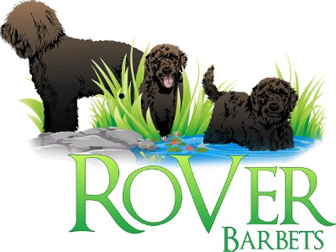 barbet puppies for sale puppy for sale puppies for sale in ontario ontario puppies for sale rover barbets