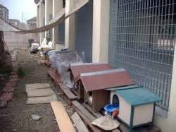 ufficio tutela animali torino aiutiamo i mici di torino