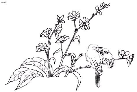 coloring pages of winter birds archives kids coloring