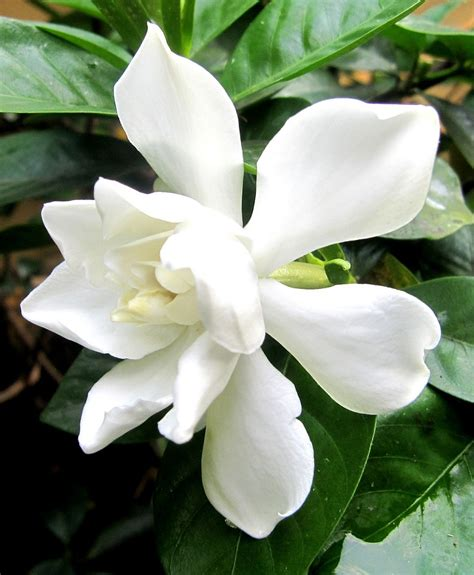 fragrant flowering plants top 10 scented plants that will make your garden a