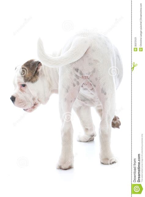 the wagging the wagging of a stock image image 35373121