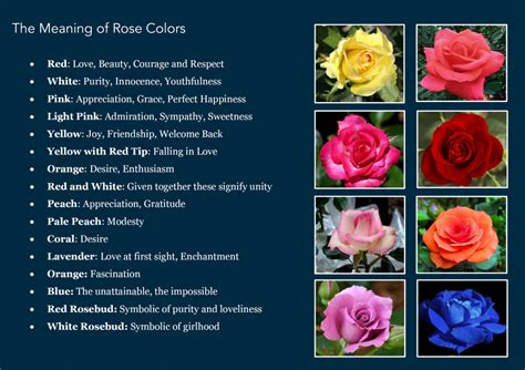 roses colors meaning secrets of a craft freak the meaning of colors