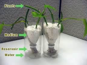 hydroponics for beginners using fish myideasbedroom com