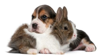 puppies and bunnies astrology signs rabbit and compatibility lovetoknow