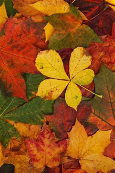 wallpaper daun gugur daun musim gugur pola alam gratis foto download gratis