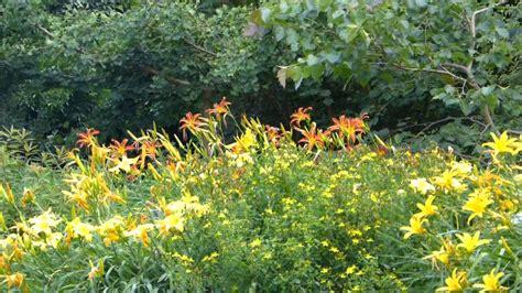 blumen und pflanzen bl 252 hende blumen und pflanzen im botanischer garten m 252 nchen